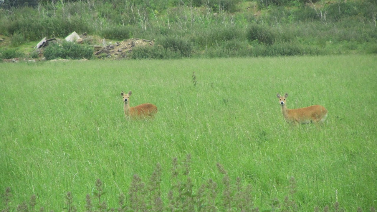 Deer in Whipsnade Zoo