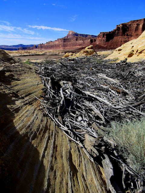 Log jam at the high water mark of Lake Powell
