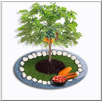http://tunturuntun-com.blogspot.com.es/2011/03/fruta-bomba-papaya-papayo-carica-papaya.html