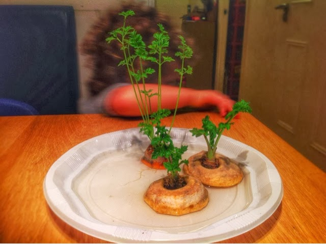 Growing Some Carrot Tops
