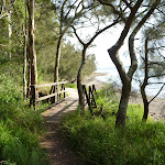 Timber bridge by Lake Macquarie in Green Point Reserve (389861)