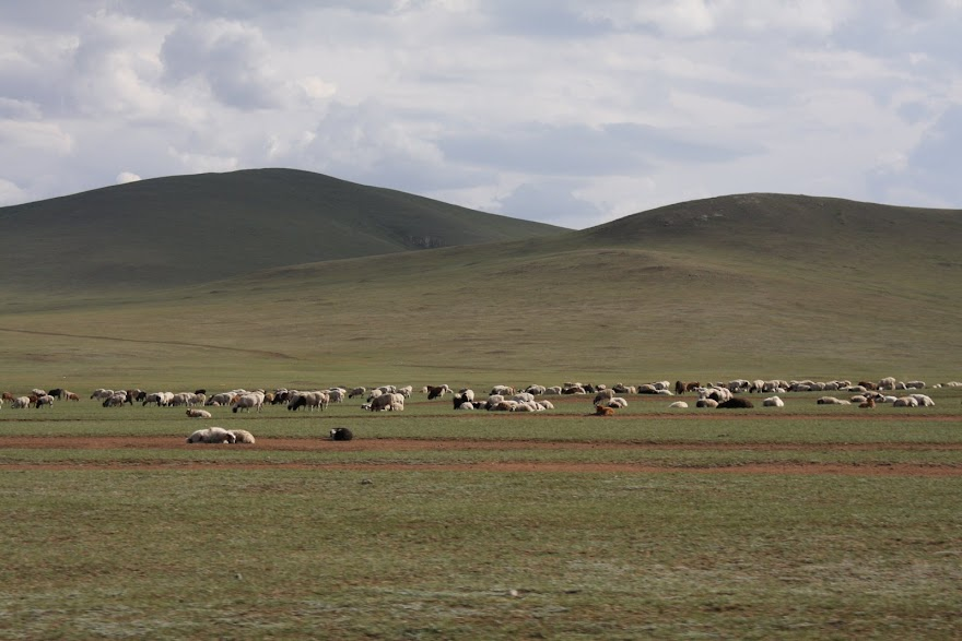 Compreender a TRANSUMÂNCIA na Mongólia