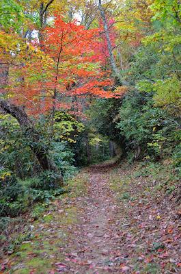 Indian Grave Gap Trail