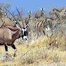 2014 - Namibia, Etosha National Park