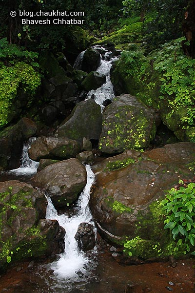 A beautiful waterstream amongst countless flowing in the valleys of Tamhini Ghat in the Western Ghats