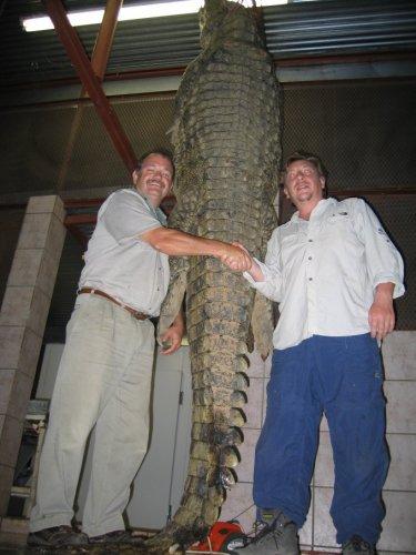 Crocodilo do Nilo VS Aligator 23