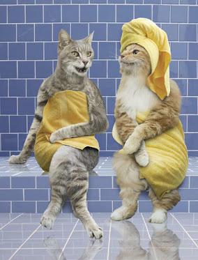 حمام النساء ممنوع الدخول التماسيح