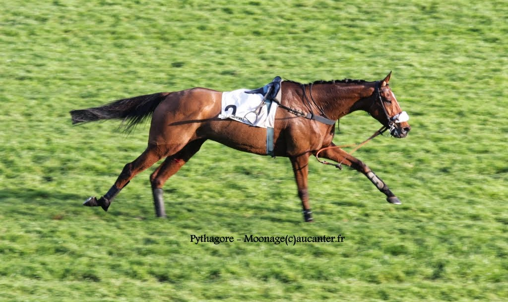 Photos Auteuil 2-11-2014 (48h de l'obstacle) IMG_5662
