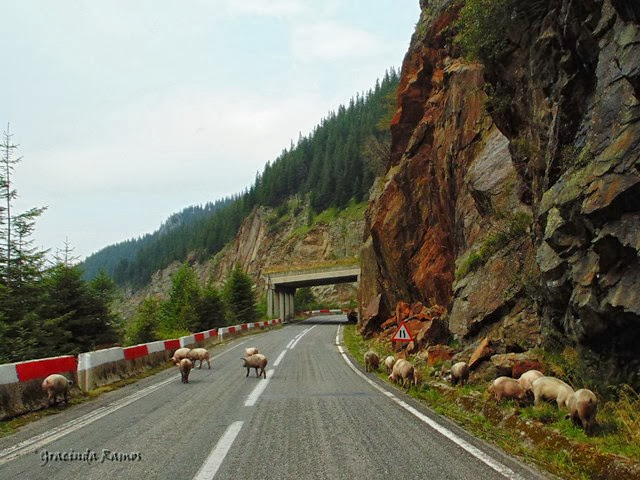 passeando - Passeando pelos Balcãs... rumo à Roménia! - Página 11 DSC03103a