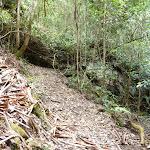 Lyrebird Trail alongside Wollombi Brook (364862)
