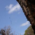 Spider web on Mackerel track (29876)