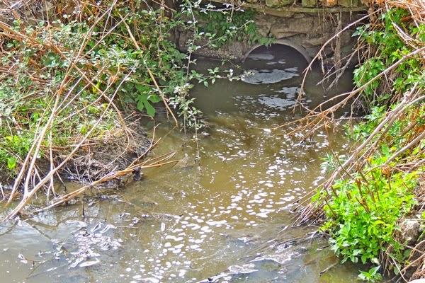 Scarico dell'effluente del depuratore di Randazzo nell'alveo in secca dell'Alcantara.