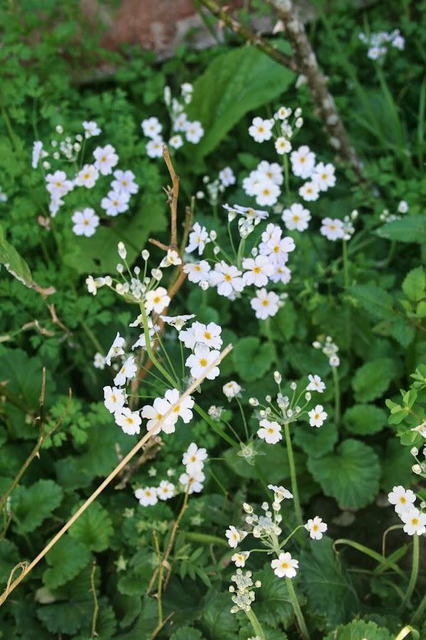 Un petit air de printemps... IMG_3843