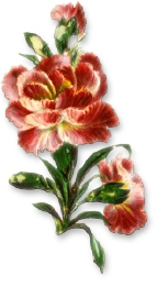 blomster%252520%2525281477%252529.png?gl=DK