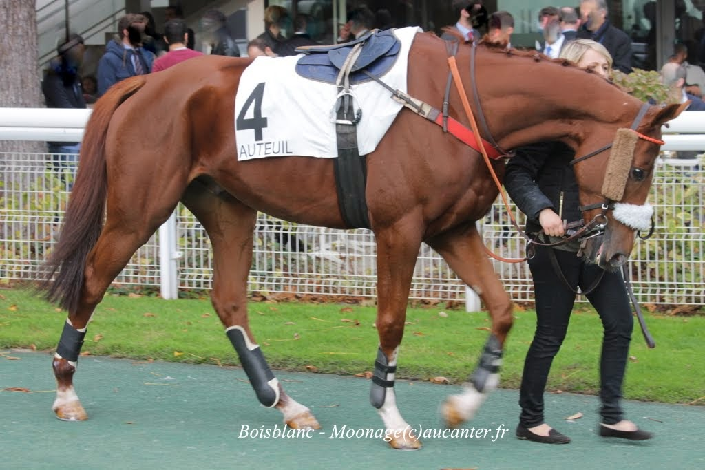 Photos Auteuil 2-11-2014 (48h de l'obstacle) IMG_5437