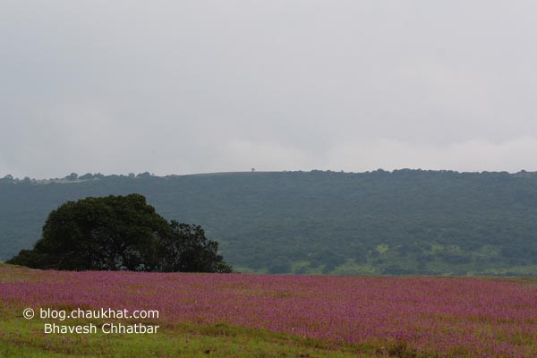 Flower-bed landscape at Kas Plateau