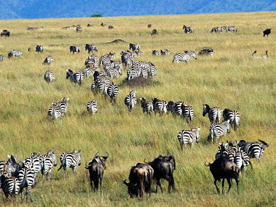 Serengeti National Park Picture