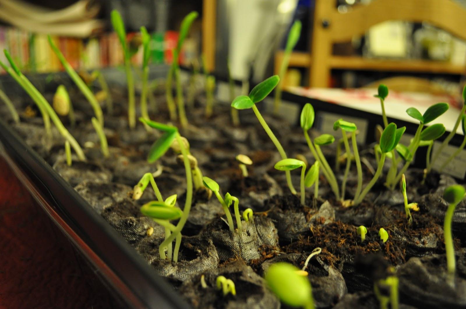 Kitchen Meets Culinary Clutz: Vitameatavegamin Garden... Take IV