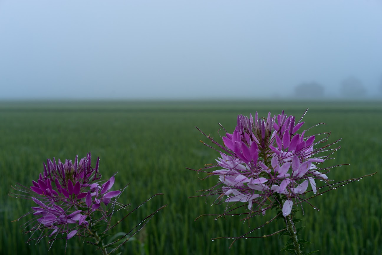 朝露煌めく可憐な野花