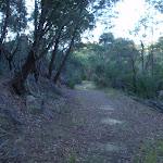 Forest on the fringe of Cherrybrook (153151)
