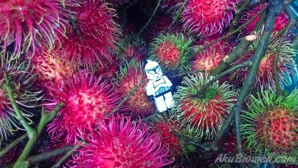 stormtroopers dan buah rambutan