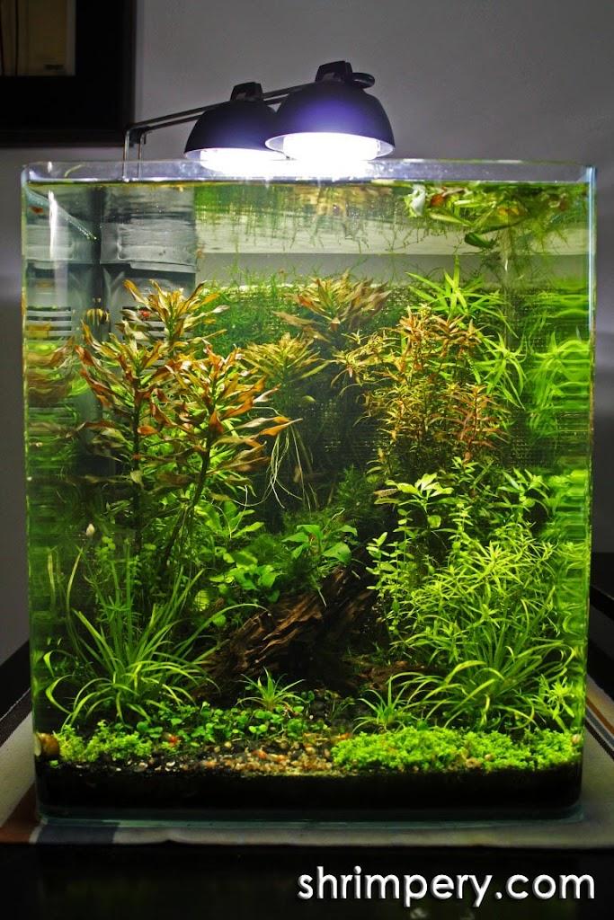 xenxes 39 s 9g journals aquatic plant central. Black Bedroom Furniture Sets. Home Design Ideas