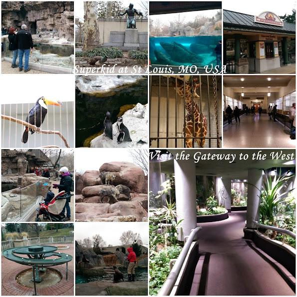 聖路易動物園,一起來看動物吧!