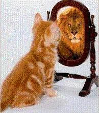 gatto che si specchia