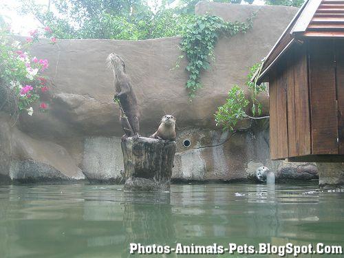 https://lh6.googleusercontent.com/-sRh2rZyP9Fg/TXxmL0gq93I/AAAAAAAAAG8/MirQW1jcJMk/s1600/Animal+pictures+_otter.jpg