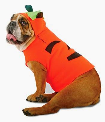 Pumpkin Dog Costume top 10 halloween pet costumes