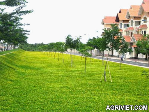 Agriviet.Com-01.jpg