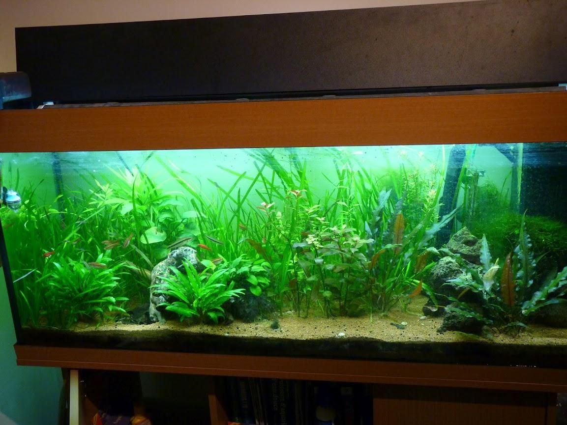 Ma petit histoire Aquariophile de 2009 à aujourd'hui  P1030715