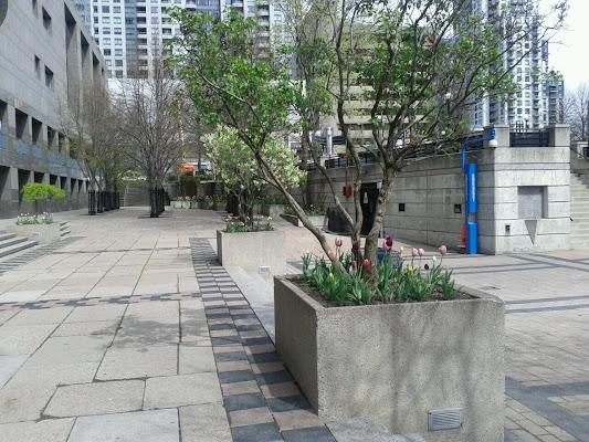 Mel Lastman Square