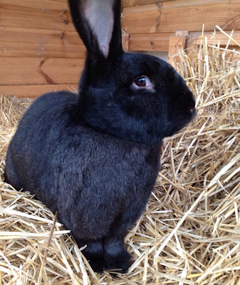 Sunday Bunny Blogging >> Peter Smith Blogging The Impossimal Being Bunny