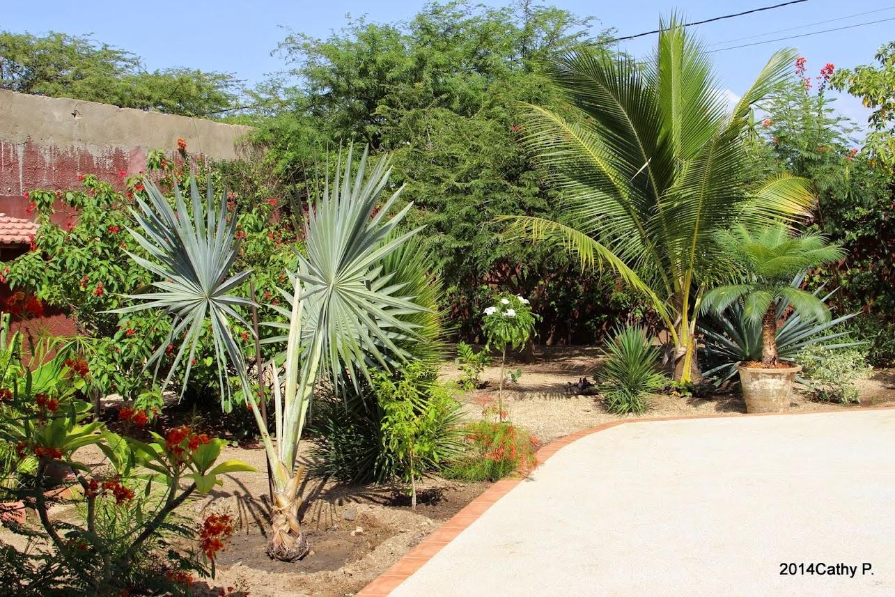 Mon jardin senegalais IMG_1672