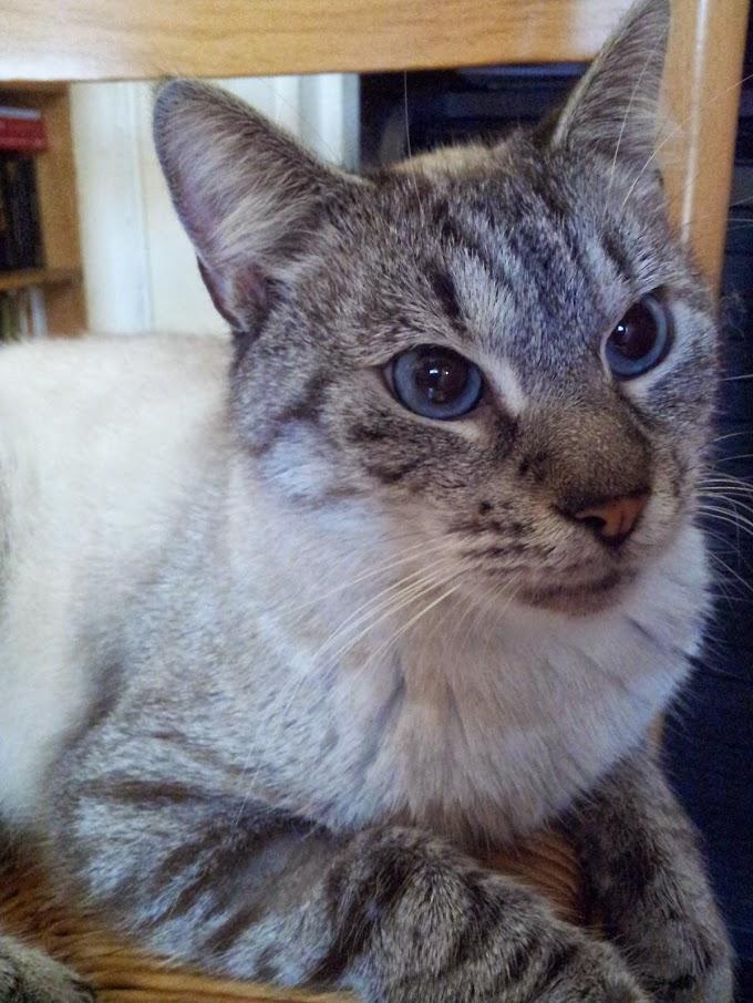 Photos des chats sauvés, avant/après - Page 7 20141115_110023