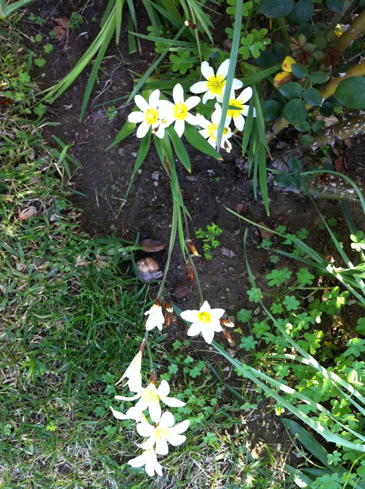 Fifi Flowers: Outdoor Flower Series Week 6