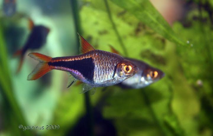 Fotók halakról