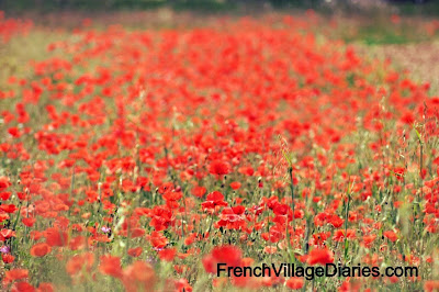 French Village Diaries Discover The Delights of Deux Sevres Silent Sunday fields colours of the rainbow