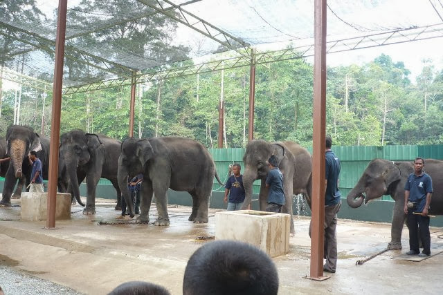 Taman-Perlindungan-Gajah-Elephant-Sanctuary