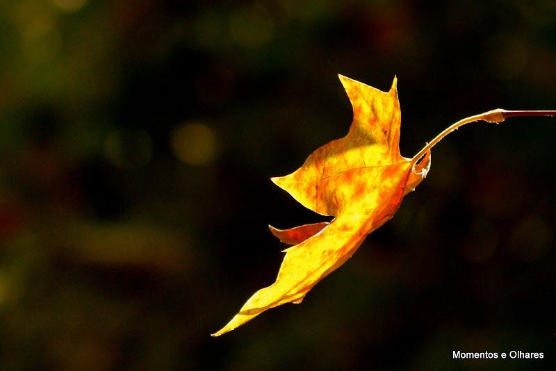 A ternura do Outono