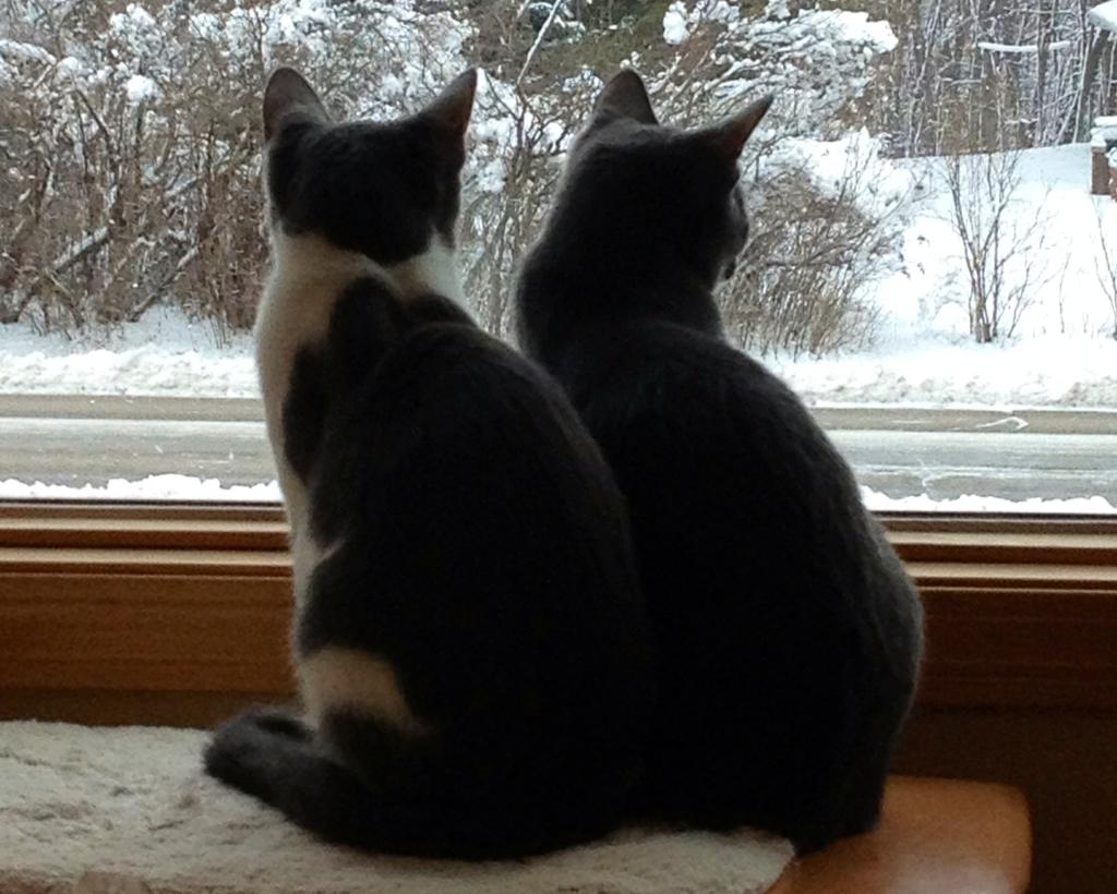2 Grey Cats
