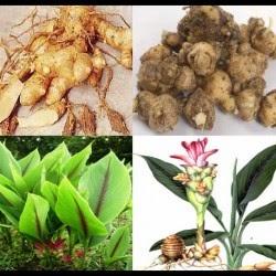 bares herbal saatnya kembali ke pengobatan herbal alami