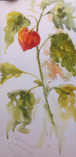Chinese lantern watercolour