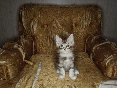 O que fazem os gatos quando ficam sozinhos em casa... | What Cats Do When They're Home Alone
