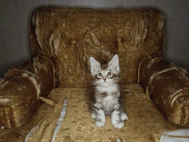 O fazem os gatos quando ficam sozinhos em casa...