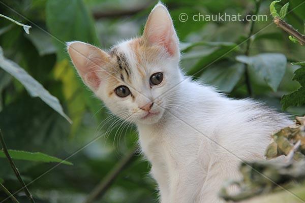 Photo of kitten