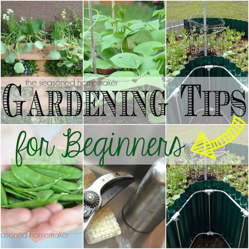Gardening Tips for Beginners by The Seasoned Homemaker