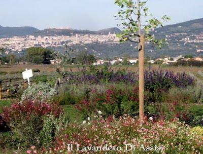 Progetti giardini privati progetti piccoli giardini for Soluzioni giardino in pendenza