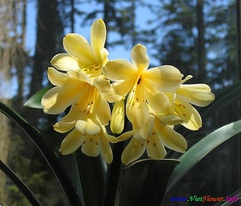 Làm sao để việc tặng hoa thành công như mong đợi?